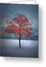 The Winter Berries Greeting Card
