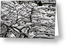 The Winter Has Arrived Greeting Card