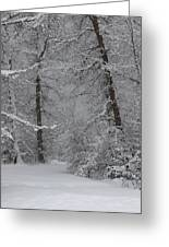 The Winter Path Greeting Card