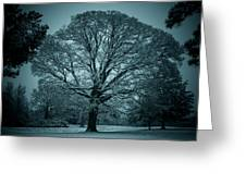 The Winter Tree Greeting Card