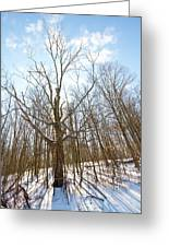 The Winter Woods Greeting Card by Tim  Fitzwater