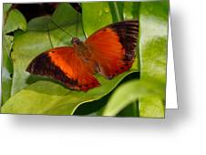 The Wizard Butterfly Greeting Card