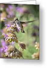 The Wonder Of Wings  Greeting Card