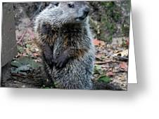 The Woodchuck Has To Pee Greeting Card