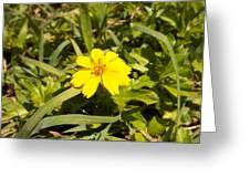 The Yellow Encamped Greeting Card