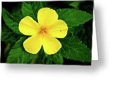 The Yellow Flower Greeting Card