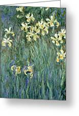 The Yellow Irises Greeting Card