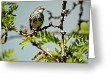 The  Yellow-rumped Warbler Greeting Card