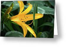 The Yelloy Lily Greeting Card