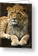 The Young Lion Greeting Card