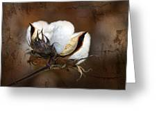 Them Cotton Bolls Greeting Card