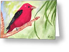 Theodore Tanager Greeting Card