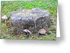 There Is A Fungus Among Us Greeting Card