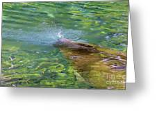 There She Blows Manatee Greeting Card