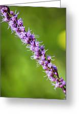There You Are Blazing Star Greeting Card