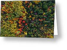 These Are Trees Greeting Card