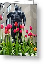 These Tulips Are For You Greeting Card