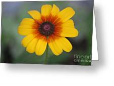 They Call Me Mellow Yellow. Greeting Card