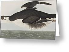 Thick-billed Murre Greeting Card