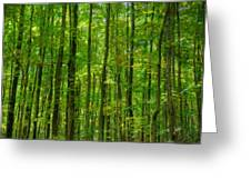 Thick Forrest Greeting Card