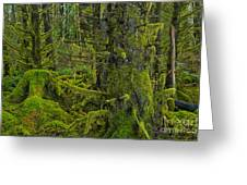 Thick Rainforest Greeting Card