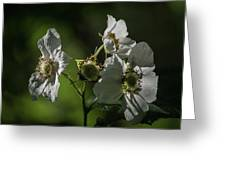 Thimbleberry Blossoms Greeting Card