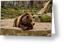 Thinker Bear Greeting Card