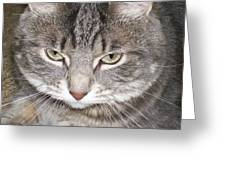 Thinking Holly The Cat Greeting Card