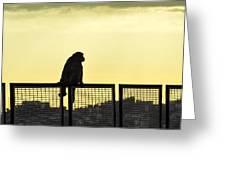 Thinking Monkey Greeting Card