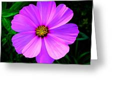 Thinking Of You ... Greeting Card