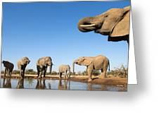 Thirsty Elephants Greeting Card