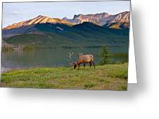 This Is Alberta 10 - Bucks Sunset Snack Greeting Card