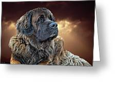 This Is Grizz Greeting Card