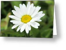 This Is Spring Greeting Card
