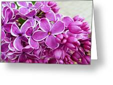 This Lilac Has Flowers With A White Edging. 4  Greeting Card