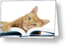 This Tabby Cat Loves Books  Greeting Card