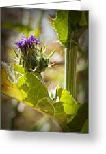 Thistle 2 Greeting Card
