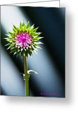 Thistle Bloom Greeting Card
