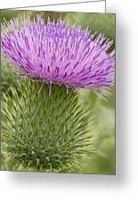 Thistle Close-up Greeting Card