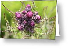 Thistle Do 2 Greeting Card