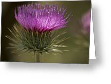 Thistle Flower Greeting Card
