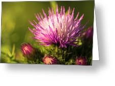 Thistle Flowers Greeting Card