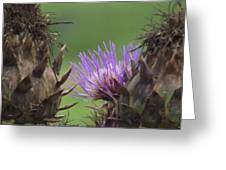 Thistle In Hiding Greeting Card