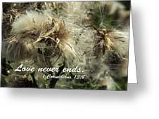 Thistle In Seed Greeting Card