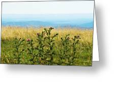 Thistle On The Blue Ridge Greeting Card