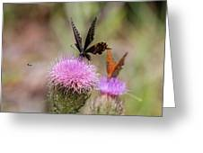 Thistle Pollinators - Large And Small Greeting Card