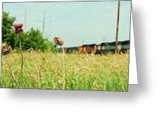 Thistle Rail Greeting Card