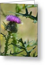 Thistle Spikes Greeting Card