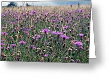 Thistle Storm  Greeting Card