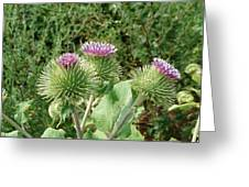 Thistle Trinity Greeting Card